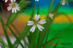 Обычное фото цветка