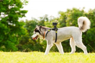 aka-dm1 Sony HDR-AS30VR для собак