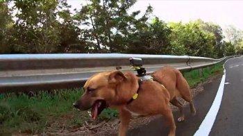 аква-бокс SPK-AS2 на собаке