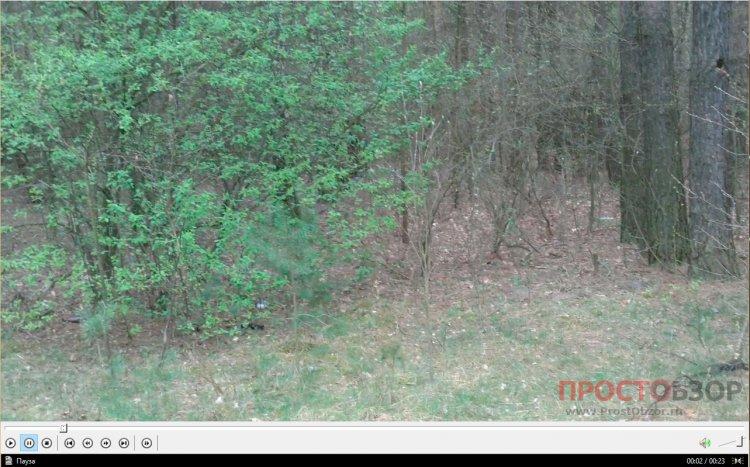 Garmin Monterra - пример видео съемки леса