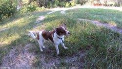 Пример фото собаки навигатором NuviCam