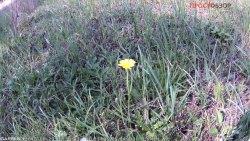 Пример фото травы навигатором NuviCam