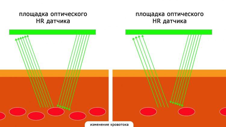 Как измеряет оптический HR датчик в часах Garmin